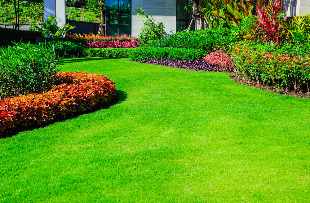 healthy landscaping