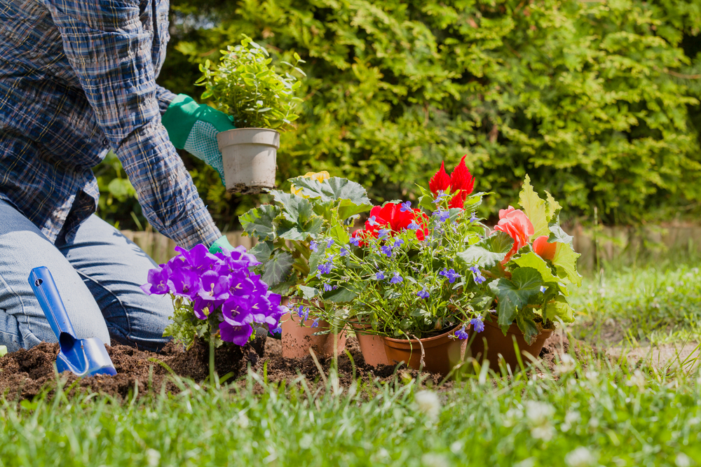 healthy landscape tips