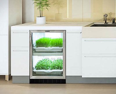 A Convenient In-Kitchen Greenhouse